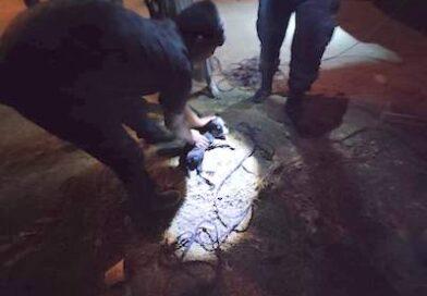 Protección Civil rescata cachorro que cayo a un pozo de agua en Huetamo