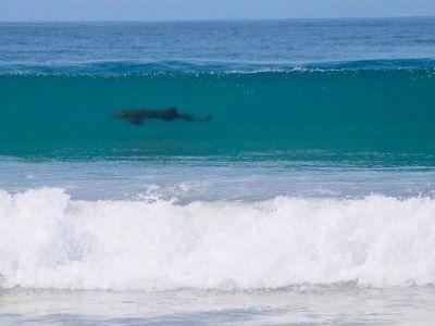 Avistan tiburones en Mazunte, Oaxaca; piden a turistas no acercarse
